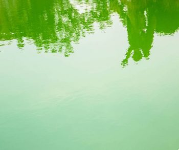 green algae pool